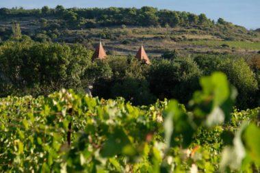 vigne_chateau_moulin_de_lene